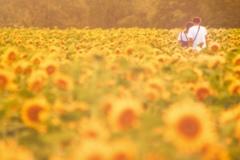 想い出の夏