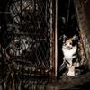Cat with scrap
