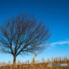 裸木と冬空