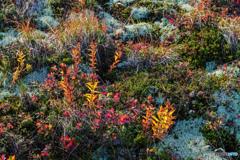 湿原の秋 2