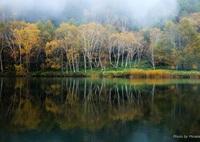 CANON Canon EOS 6Dで撮影した(霧が流れる)の写真(画像)