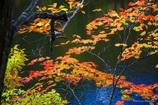 仙人池の紅葉