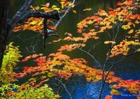 CANON Canon EOS 6Dで撮影した( 仙人池の紅葉)の写真(画像)