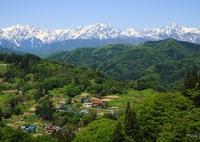 CANON Canon EOS 6Dで撮影した(新緑の山村と北アルプス(山村に生きる))の写真(画像)
