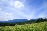 蕎麦畑から戸隠連山を望む