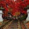 2015 清水寺(セイスイジ)の紅葉1