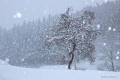 風雪に耐える