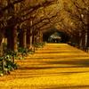Golden Carpet