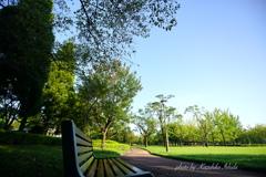 早朝の公園は気持ちいい