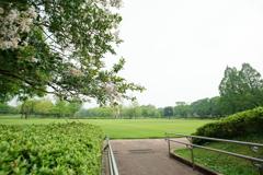朝の公園 広角
