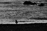 海辺の暮らし                歩み・・