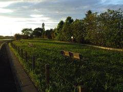 2017/06/04_西日を浴びる後野公園