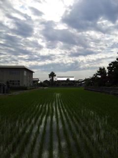 2017/06/15_水田に雲