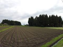 2018/06/16_畑