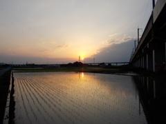 2017/06/11_水田の夕暮れ