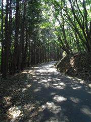 2017/09/10_木漏れ日の林道