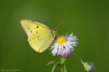 蝶の季節-2-