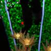 Flower Fantasy-4-