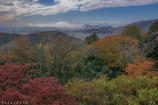 太平山の秋