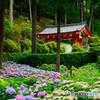 紫陽花の咲くお寺