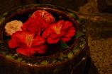 手水鉢に季節の移ろい