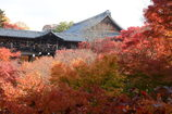 赤に染まる東福寺