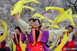 佛教大学 紫踊屋さん1