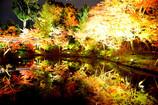 臥龍池の水鏡