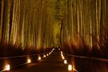 竹林の小径・嵐山花灯路
