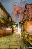辰巳橋の枝垂れ桜