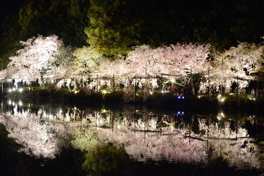平安神宮 紅しだれコンサート2014 その2