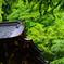 新緑の水の社