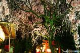 水火天満宮の枝垂れ桜