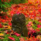 NIKON NIKON D7100で撮影した(赤くなったね。)の写真(画像)