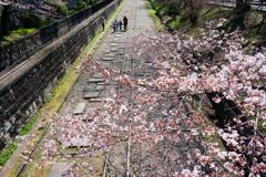 春のさんぽ道