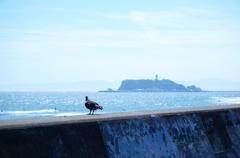 江の島を見つめて
