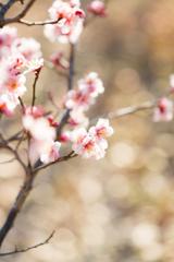 早春の慶び