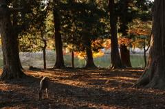 静寂に映ゆる自然の恵み
