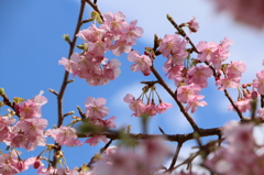 春の息吹(2)