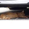 車の下のねこ