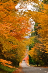 Tunnel of colored leaves.
