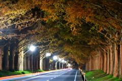 夜のメタセコイヤ並木