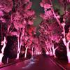 くすのき並木と光跡