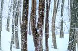 朝の美人林