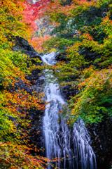 藤の滝の錦秋