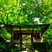 お寺の新緑