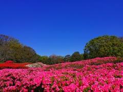 神代植物公園_37
