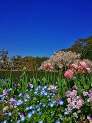 神代植物公園_35