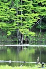 静かな湖畔の森の~♪
