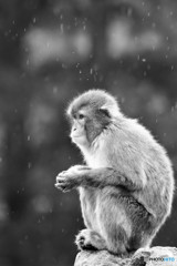 しみじみ rainy day